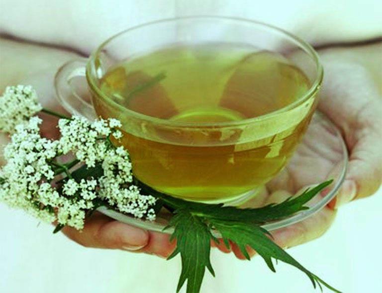 Uống nước sắc ngải dại hỗ trợ điều trị viêm da cơ địa từ bên trong