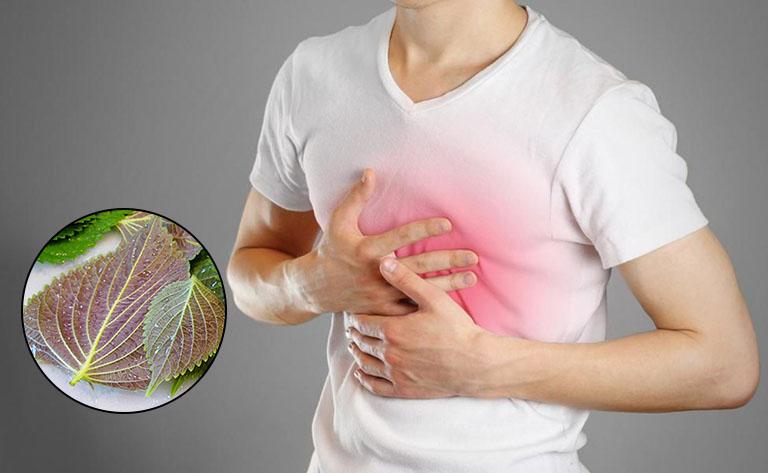 Cách chữa trào ngược dạ dày bằng lá tía tô được nhiều bệnh nhân áp dụng
