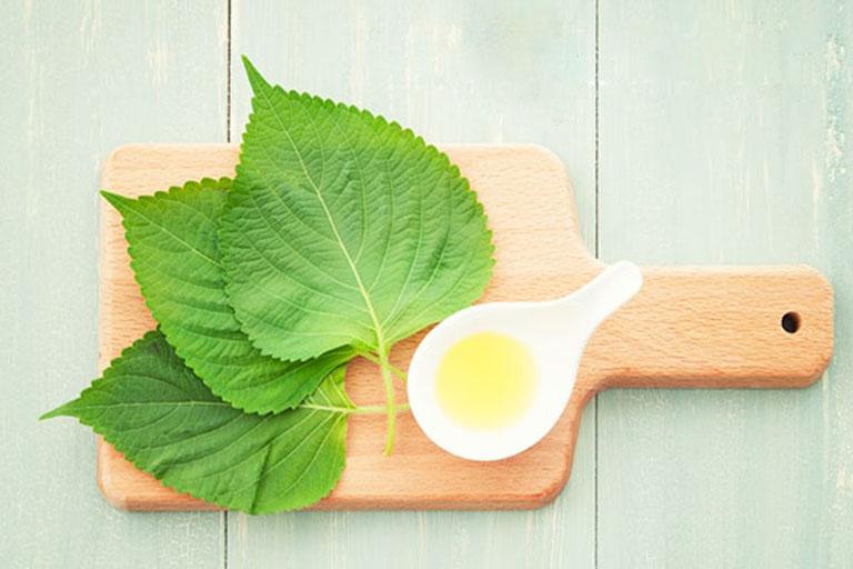 Trà tía tô có tác dụng giảm nhẹ chứng trào ngược dạ dày và hỗ trợ thanh lọc, giải độc cơ thể