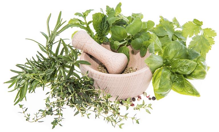 Bệnh nhân cũng có thể dùng bài thuốc kết hợp tía tô cùng với các loại thảo dược khác