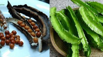 Tìm hiểu những cách chữa đau dạ dày bằng đậu rồng hiệu quả nhất
