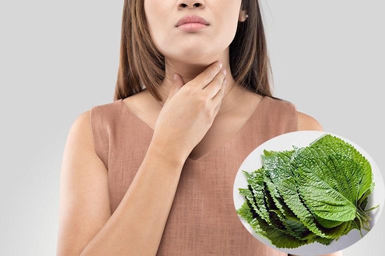 Theo cả Đông y và Tây y, lá tía tô đều có tác dụng điều trị viêm họng