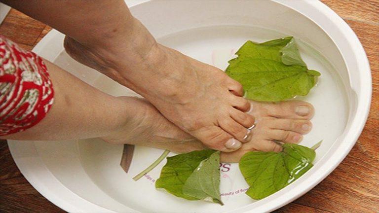 Chữa bệnh với lá lốt tươi ngâm khớp mỗi ngày