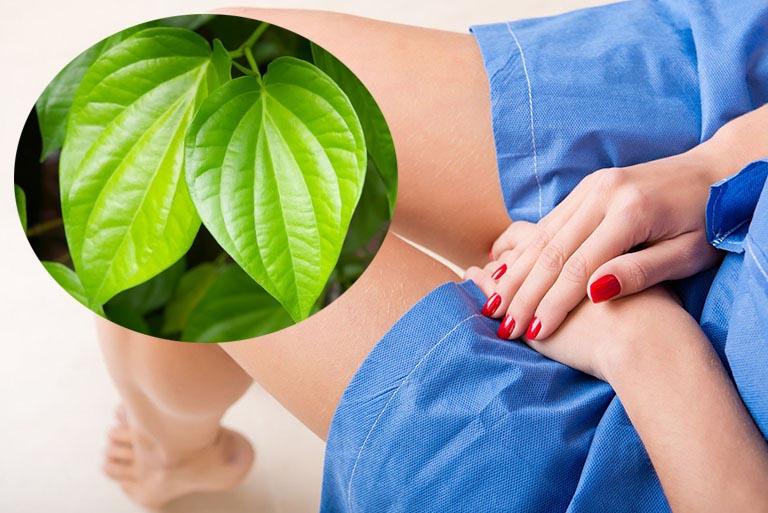 Sử dụng lá trầu không đúng cách giúp tăng hiệu quả trị ngứa, đánh bay được mùi mồ hôi ở vùng kín hiệu quả