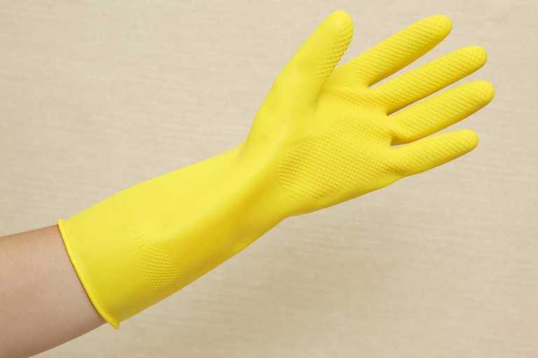 Hãy nhớ đi gang tay trong quá trình thu hái để tránh nhựa dính vào da
