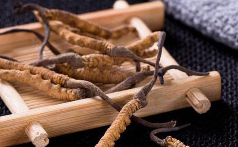 Trùng thảo mang đến cho người dùng rất nhiều công dụng tốt cho sức khỏe