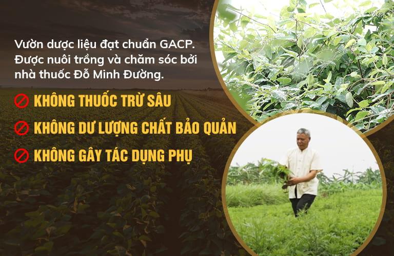 Đỗ Minh Đường sở hữu vườn dược liệu sạch, rộng hơn 20ha
