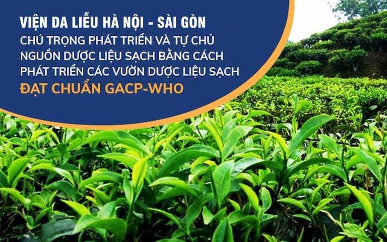 Viện Da liễu Hà Nội - Sài Gòn chú trọng phát triển các vườn dược liệu sạch đạt chuẩn