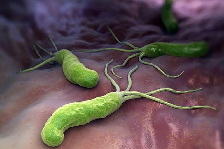 Vi khuẩn HP tồn tại và phát triển trong dạ dày con người