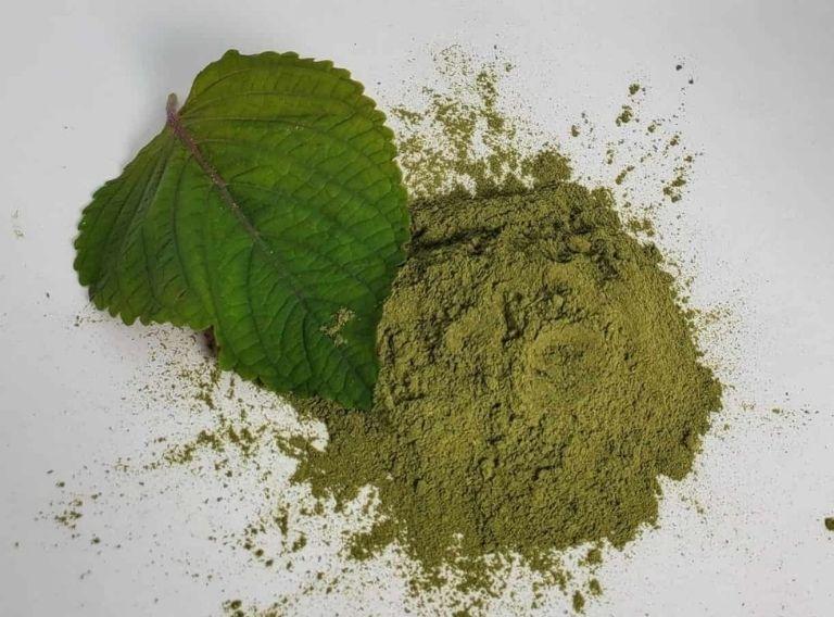 Bột lá tía tô có tác dụng thanh nhiệt, giải độc hiệu quả
